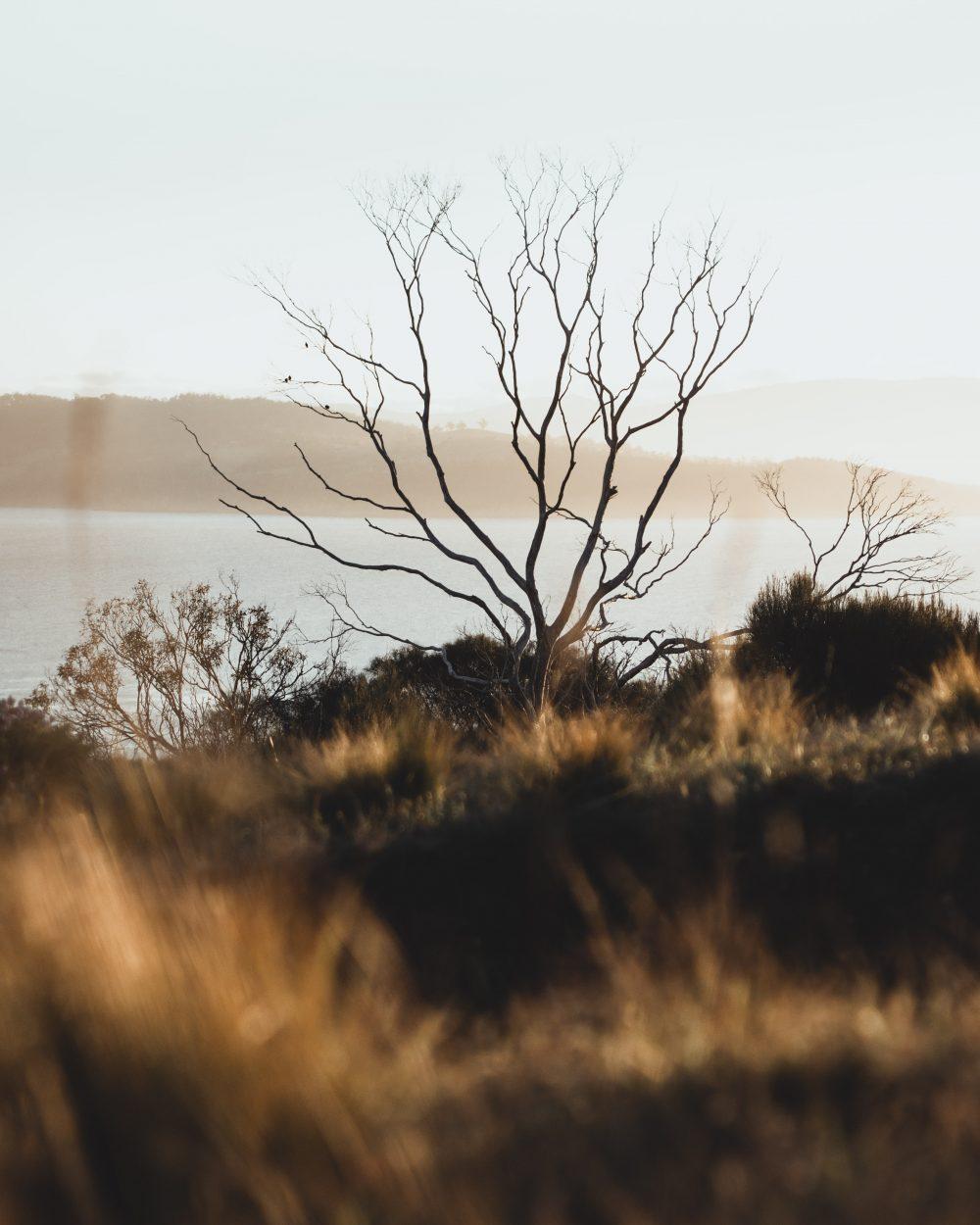 Tasmania Hilltop / Elopement photography